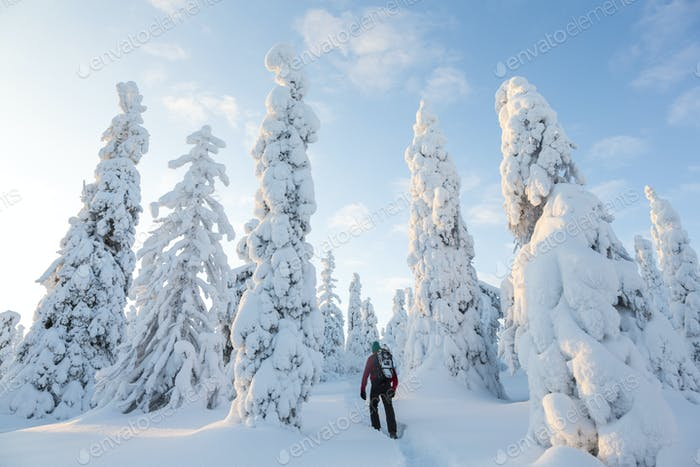 Rückansicht des Mannes zu Fuß im Wald mit schneebedeckten Bäumen.