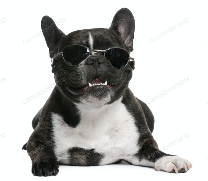 French Bulldog, 4 years old, wearing sunglasses in front of white background