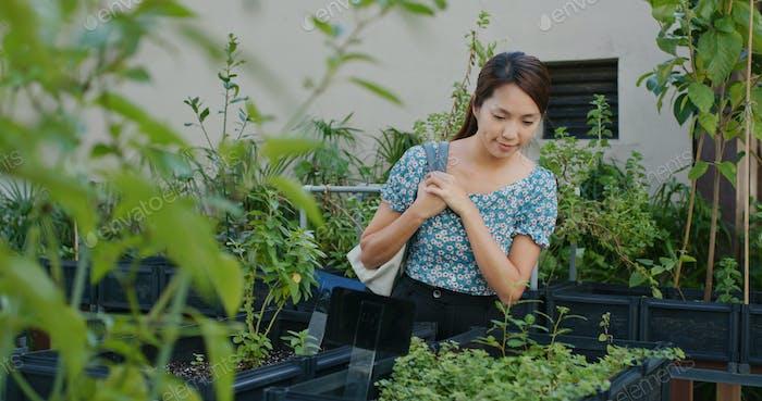 Frau Shop Blumenpflanzengeschäft