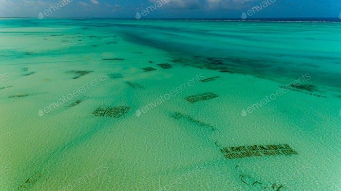 sea weed plantation, Zanzibar