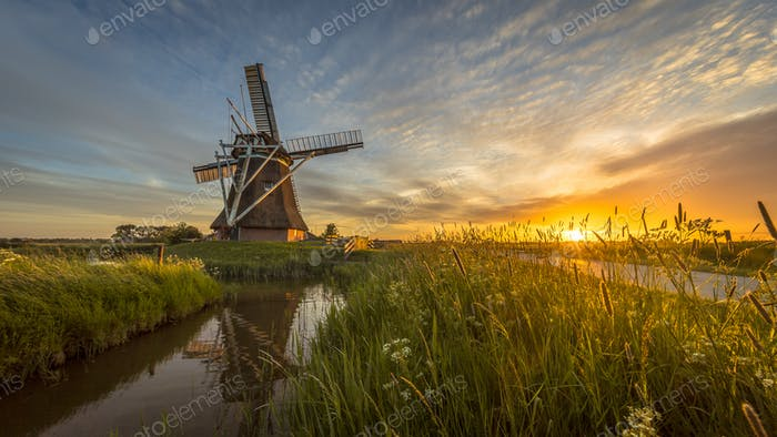 Wooden windmill grass and flowers