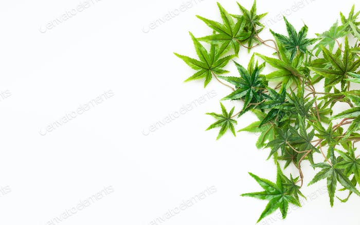 Decorative cannabis leaves isolated on white background