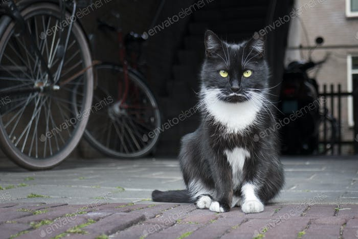 Black and white cat sitting on the street
