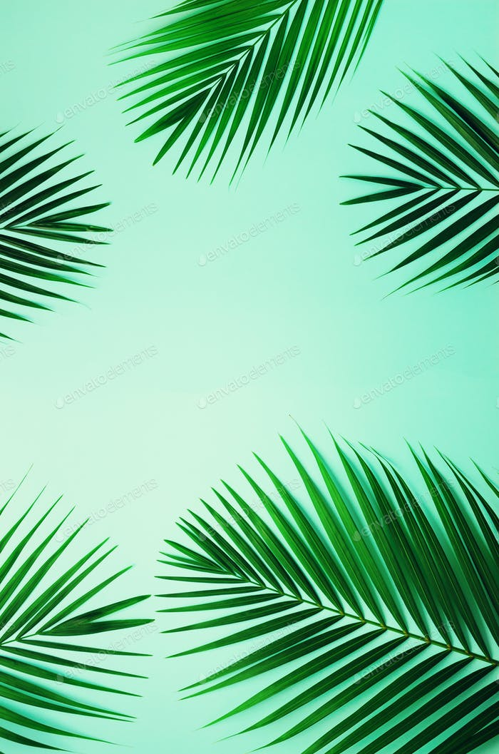 Tropical palm leaves on pastel blue background. Minimal summer concept. Creative flat lay with copy