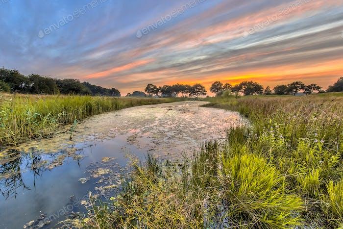 Typischer Libellenlebensraum in den Niederlanden