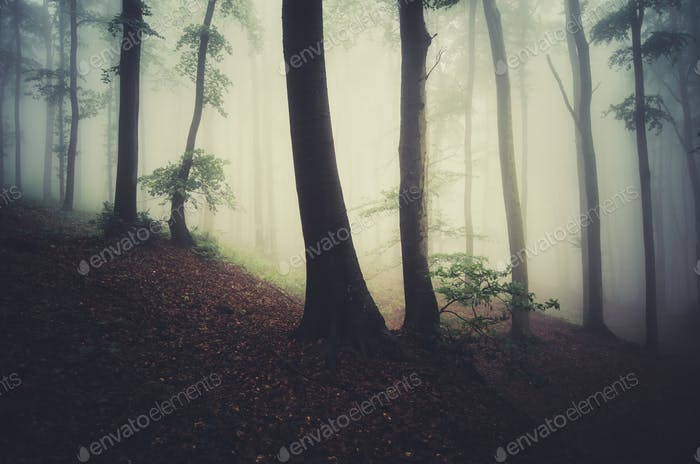 morning light in foggy forest fantasy background