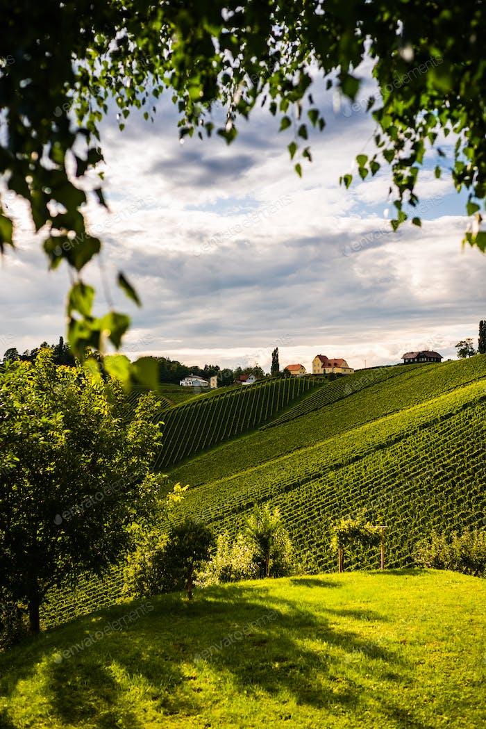 Austria, south styria vineyards travel destination. Tourist spot for vine