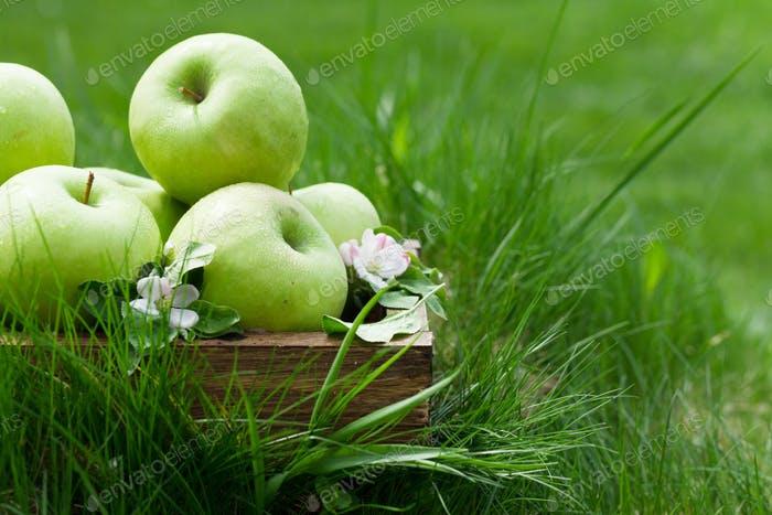 Fresh garden green apples in box