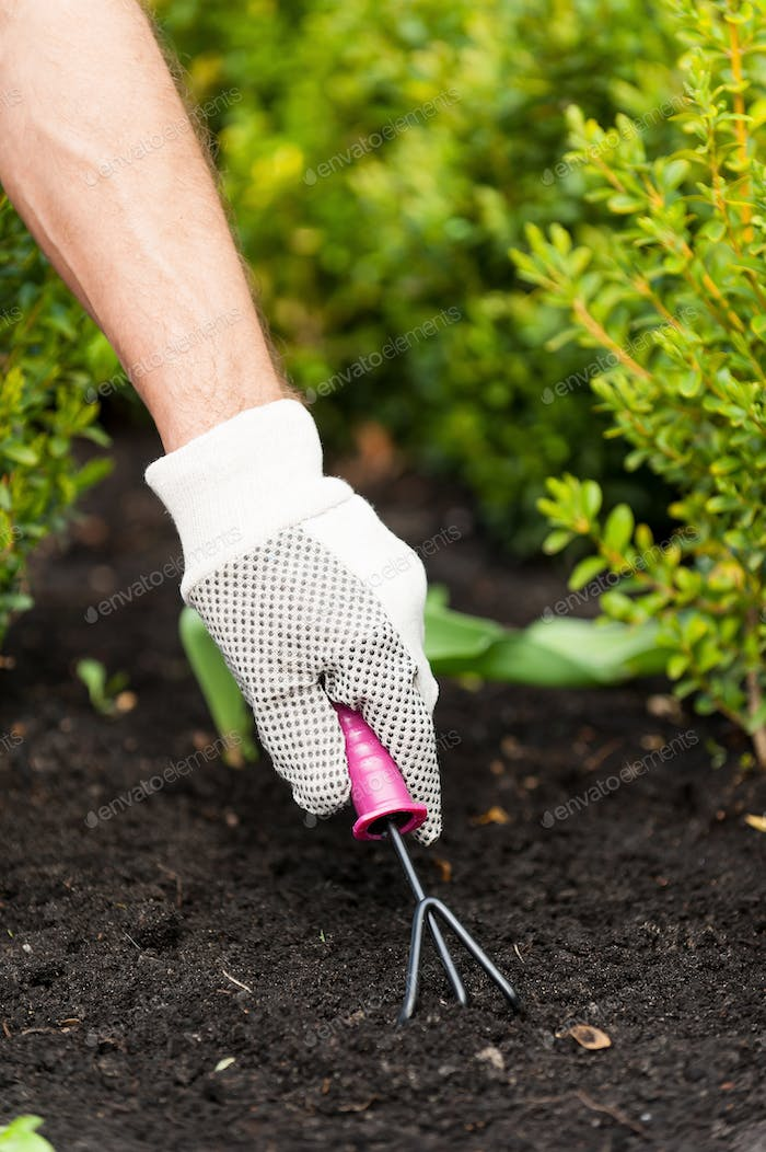 Gardening. A middle-aged man working in the garden