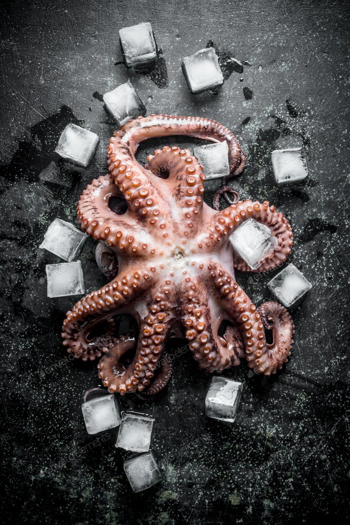 Octopus with pieces of ice.