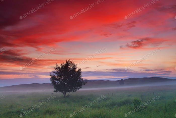 Einsamer Baum auf einem Feld bei Sonnenuntergang. Schöne Sommerlandschaft