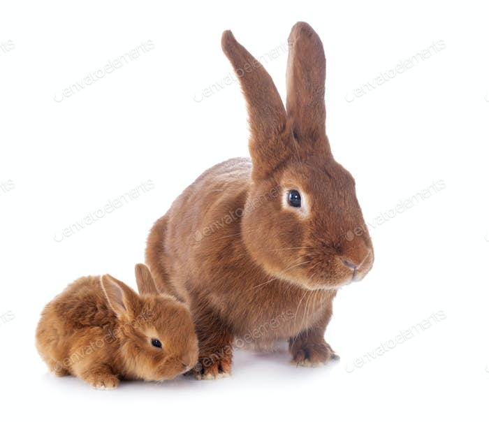 young rabbit and mother