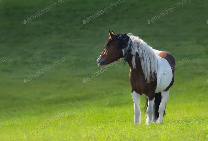 Mustang horse stand on green meadow.