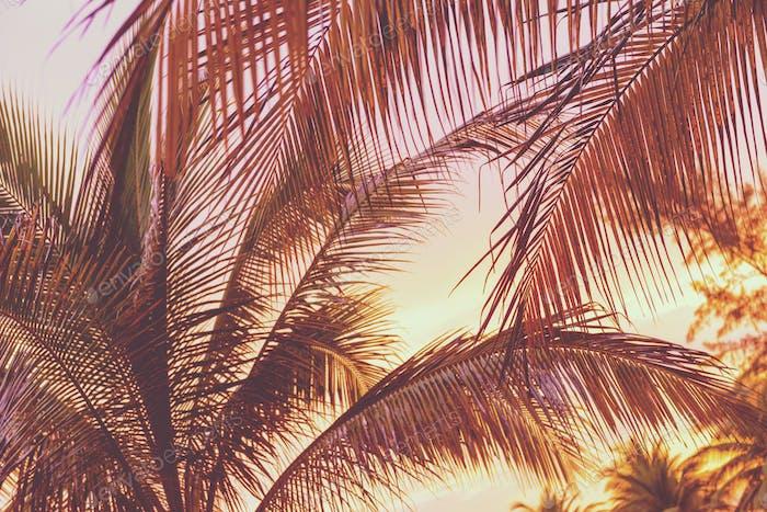 Retro Sunset On Palm Trees
