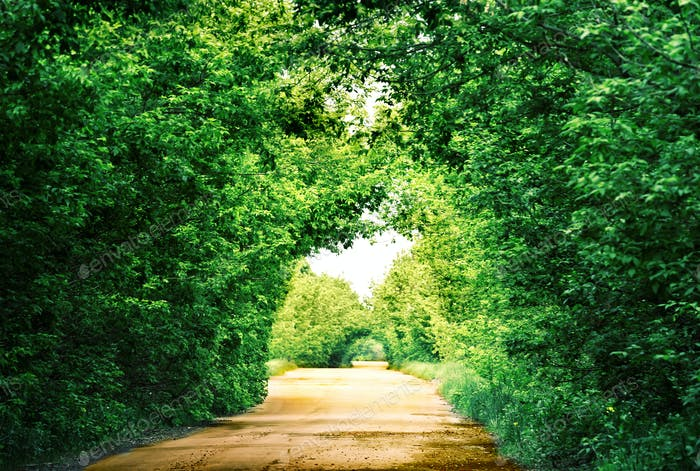 Road in a tunnel of green trees