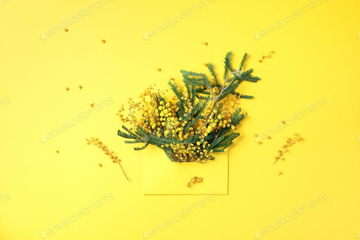 Creative layout with yellow mimosa flowers in envelope on yellow background. Top view, flat lay