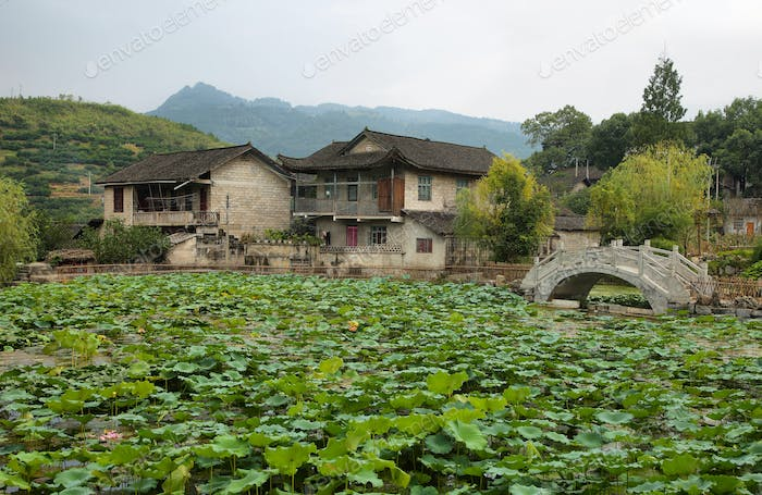 Dam full  plants i in Furong (Hibiscus) ancient village