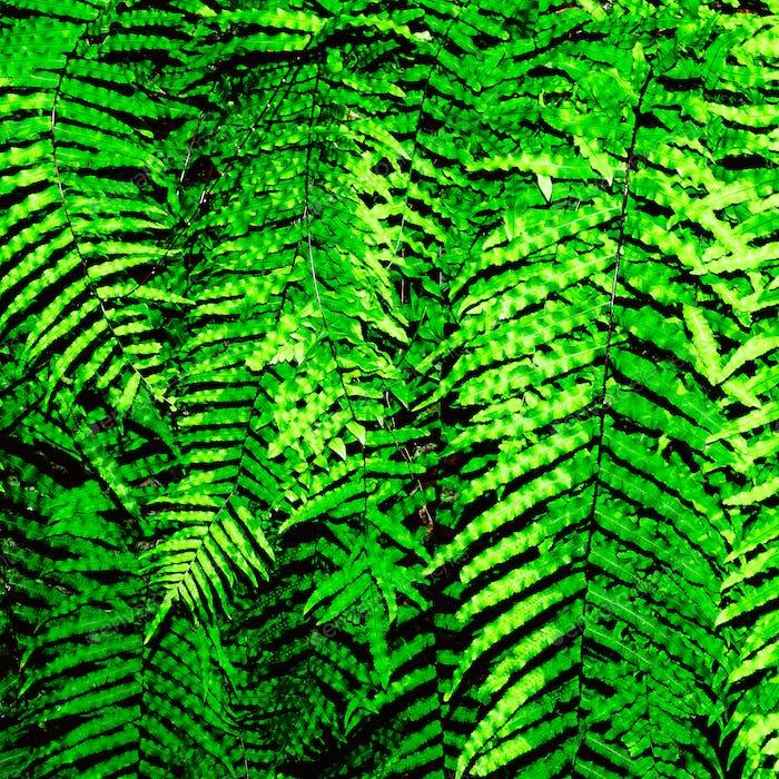 Greenery background. Tropics. Minimal design