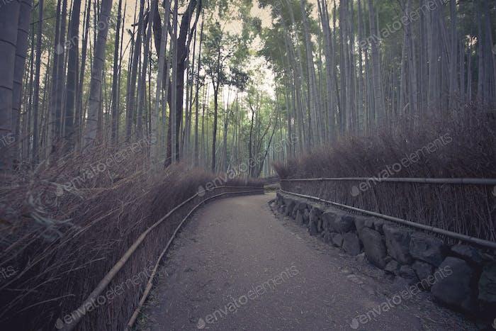 Bambuswald in der Landschaft von Kyoto