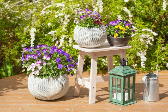 schöne Stiefmütterchen Sommerblumen in Blumentöpfen im Garten