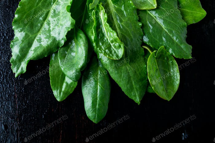 Wet spinach on black background.