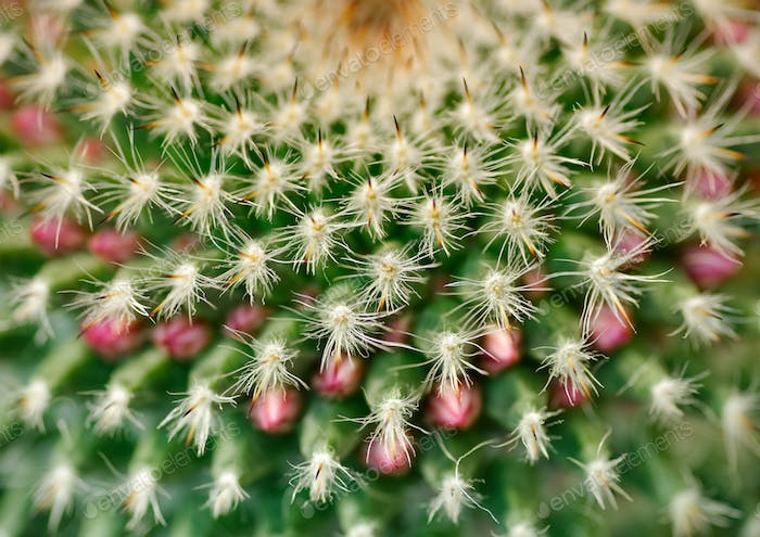 Cactus close-up shot