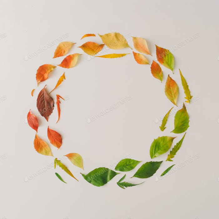 Creative wreath of colorful autumn or fall leaves. Flat lay, top view. Changing season concept.