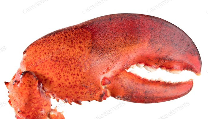 lobster's claw