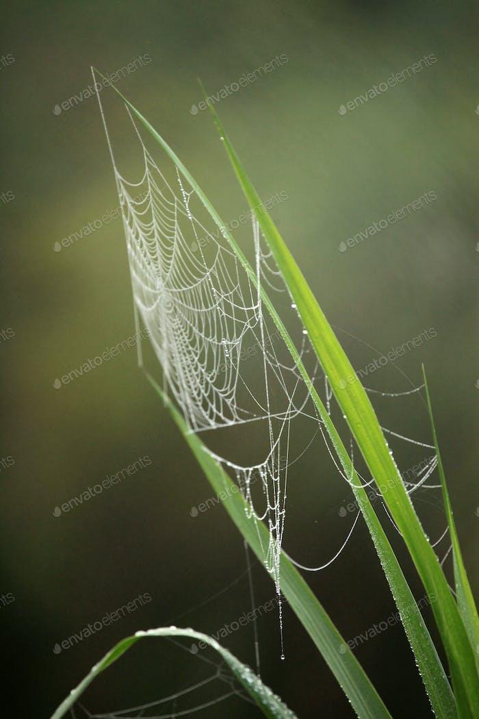 Spider Web - Remote Western Uganda