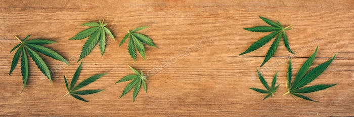 Marijuana leaves, cannabis of different sizes on wooden background, banner