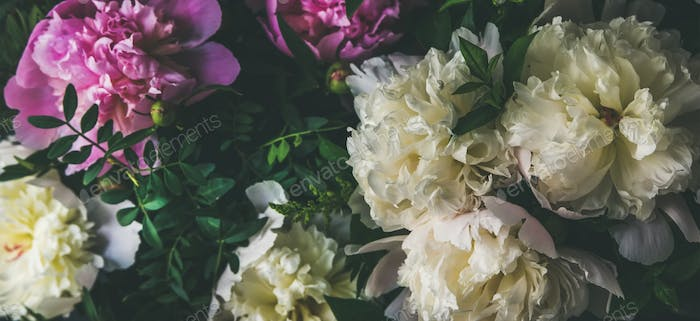 White and pink peony flowers over dark background. Natural pattern