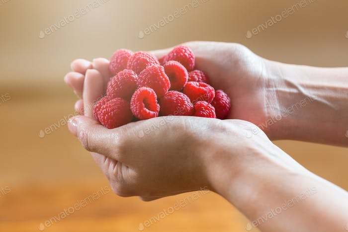 Red raspberries inside two woman hands in horizontal composition