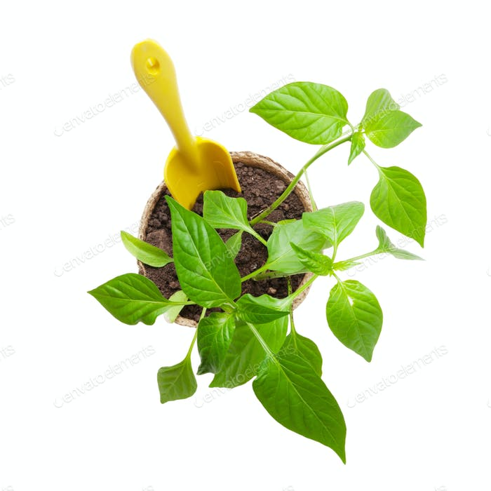 Gardening tools and seedlings