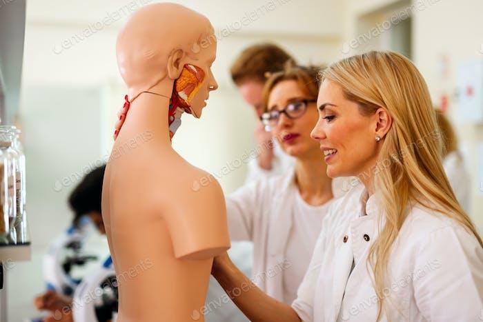 Student of medicine examining model of human body