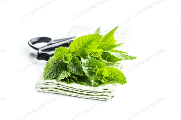 Green mint leaves.