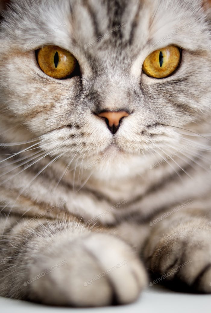Close-up of a beautiful cat