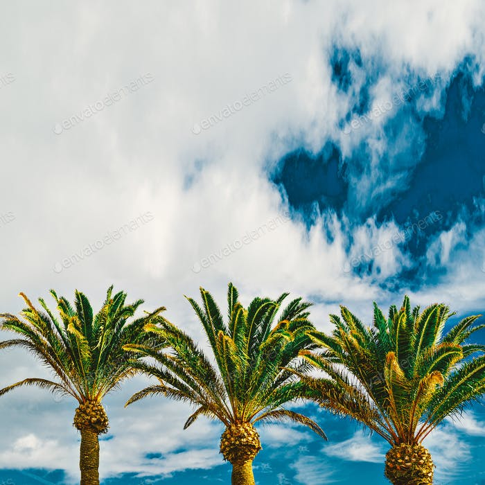 Palms. Tropical location. Travel Minimal