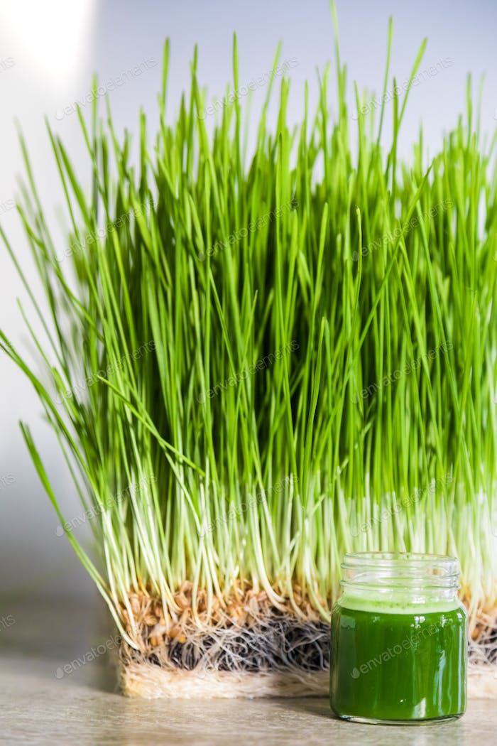 Wheatgrass details of the Roots, Seeds, Sprouts and Healthy Juic