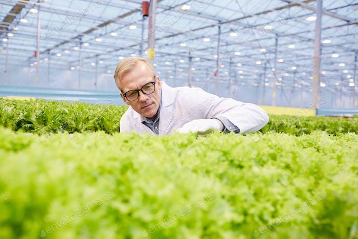 Scientist Examining Plantation
