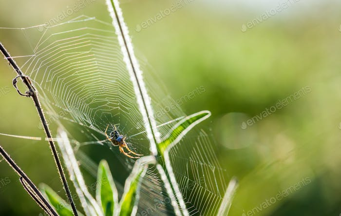 Spider web close up in wild meadow