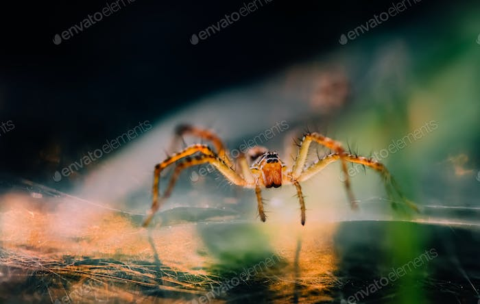 Close-up view of spider in the morning