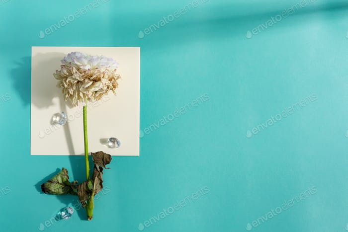 Decorative card with withered flower on a paper sheet