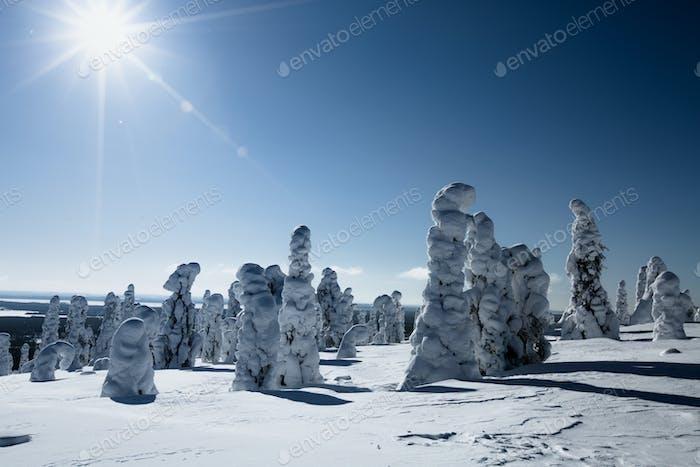 Sonnenlicht über einer Winterlandschaft in Finnland Lappland.