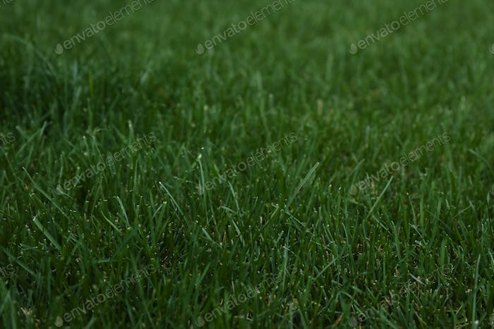 Beautiful green grass on whole background, space for text