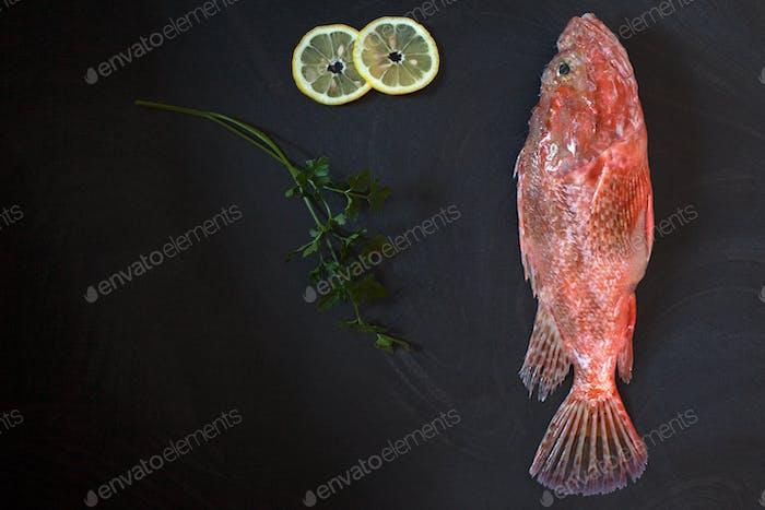 Raw Scorpionfish