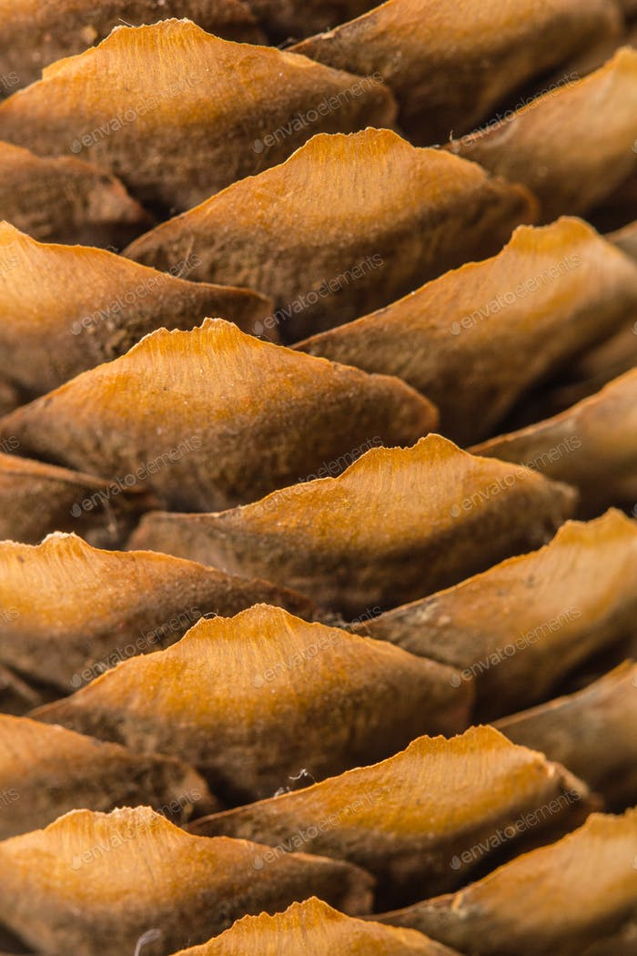 Beautiful background from  pine cones