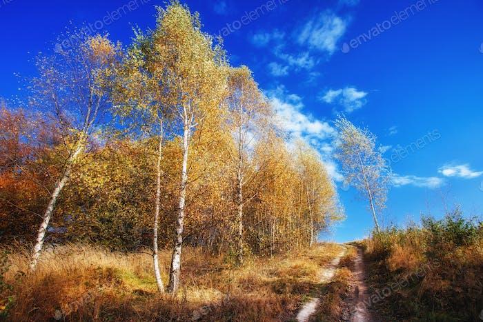 Landscape autumn park