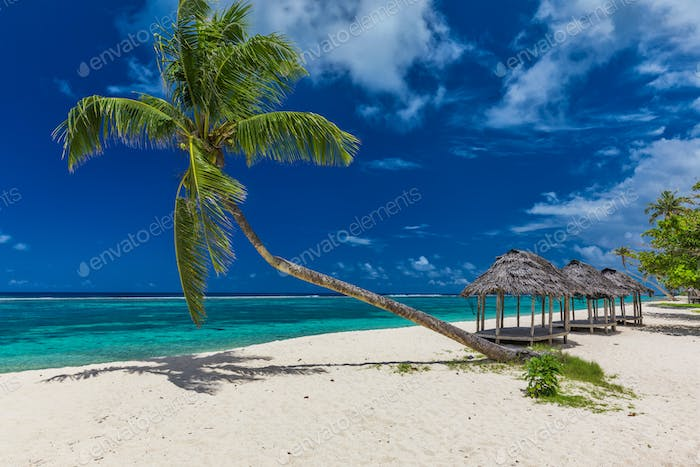 Tropical beach with a single palm tree and a beach fale