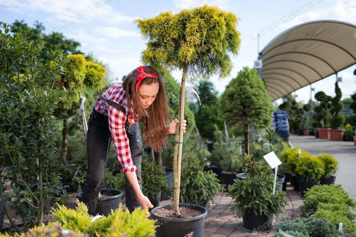Молодой садовник женщина выбирает и покупает горшечное маленькое дерево в садовом центре