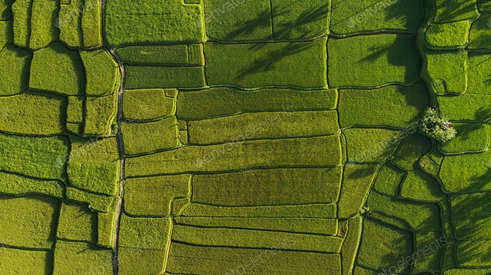 Abstract geometric shapes of rice fields in green color.